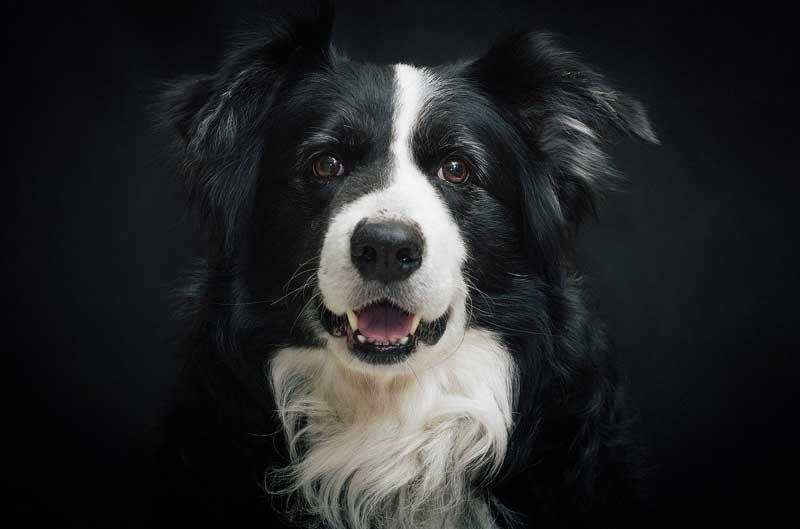 Adiestramiento canino grupal