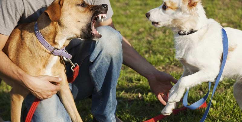 educador canino perro agresivo