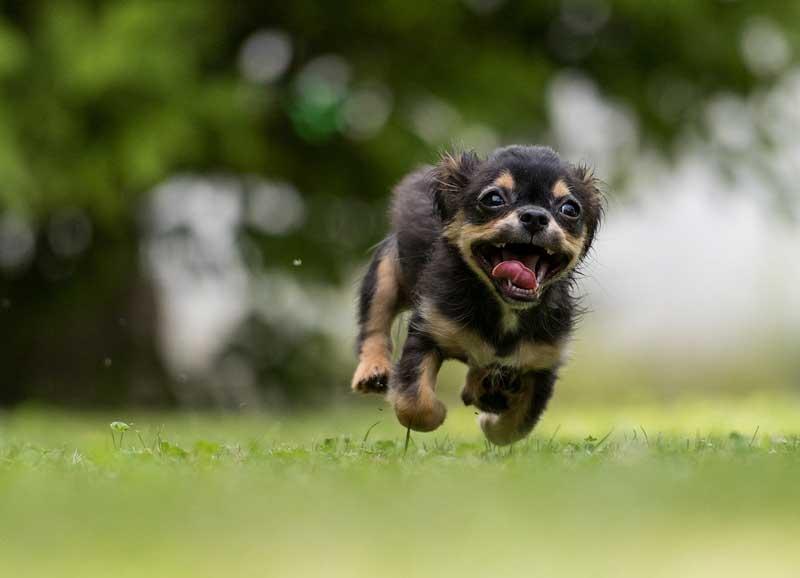 perro alterado corriendo