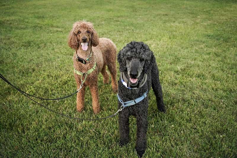 perro chilla otros perros