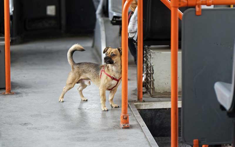 perro miedoso salir calle