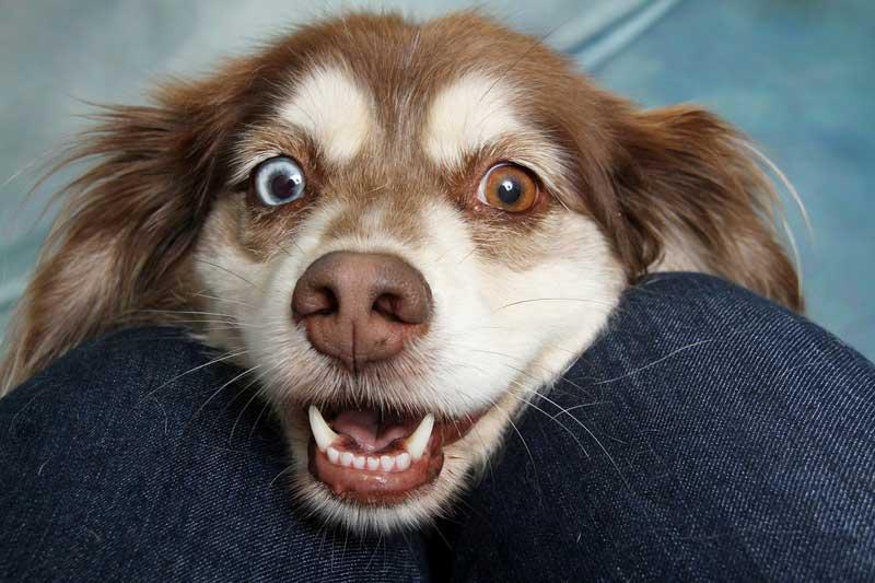 perro nervioso ante otros perros