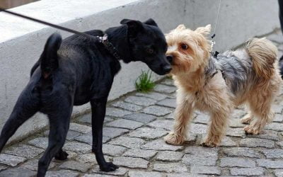 Mi Perro se Pone Nervioso con Otros Perros