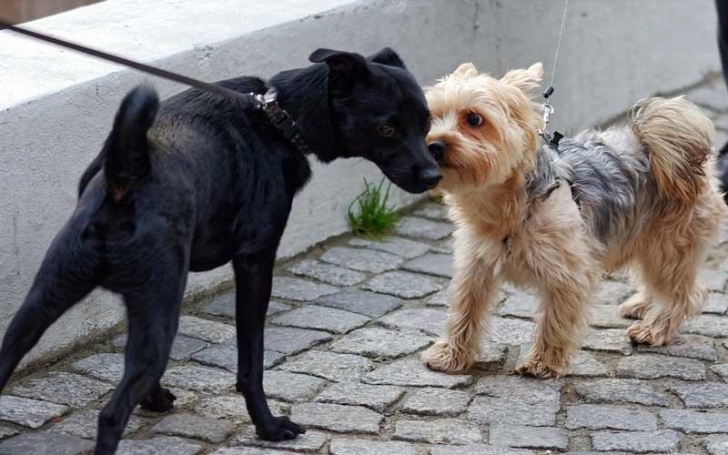 perro saluda nervioso