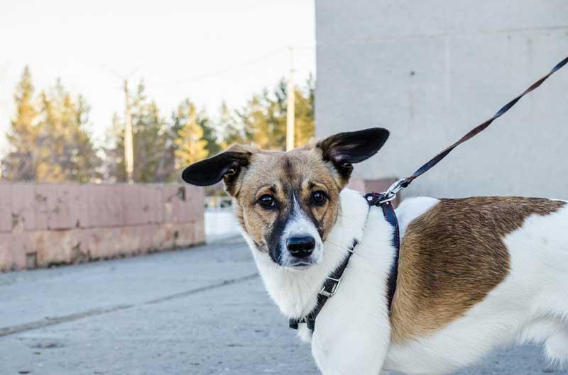 perro tiembla miedo calle