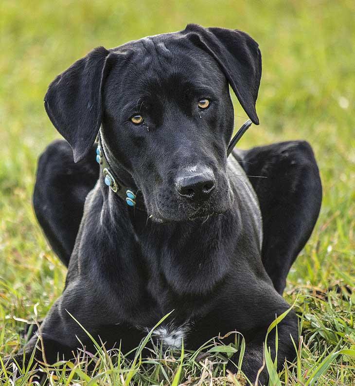 tarifas adiestrador de perros
