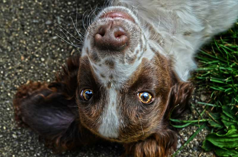terapia para perros miedosos