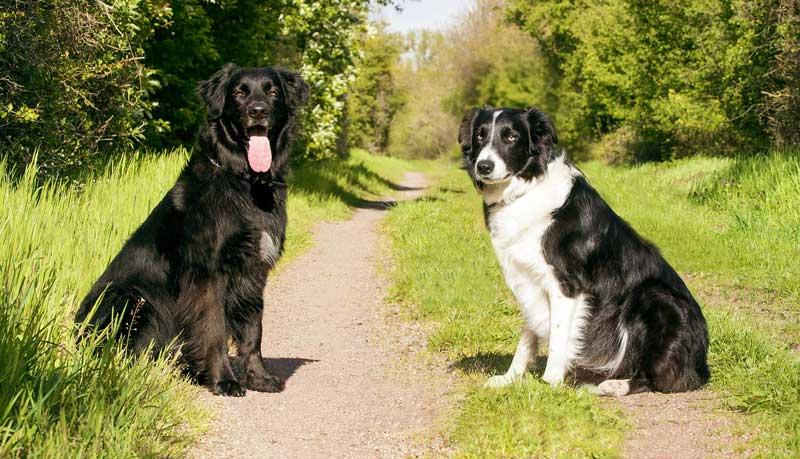 adiestradores de perros a domicilio