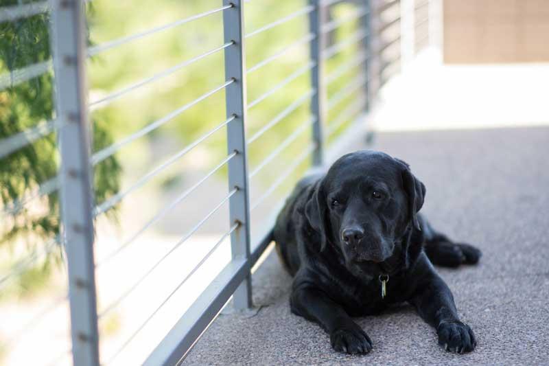 adiestramiento canino y etologia