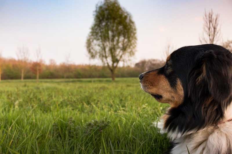 busco adiestramiento canino a domicilio