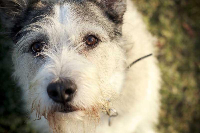 castigos efectivos para perros