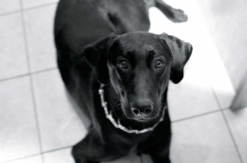 collar de pinchos para perros
