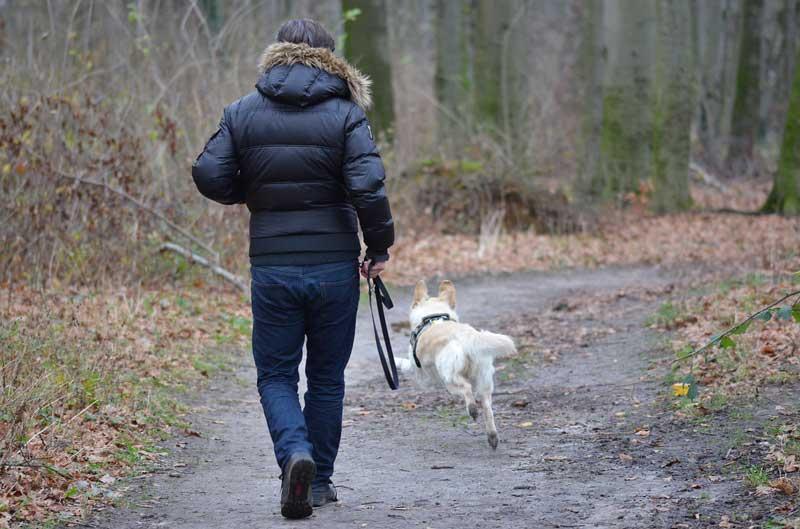 como tratar perros reactivos