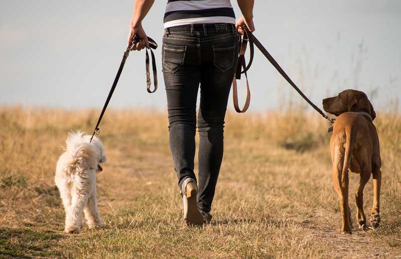 consejos para sacar a pasear a tu mascota