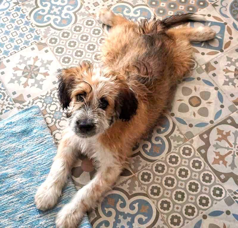 Curso de cachorros en valencia