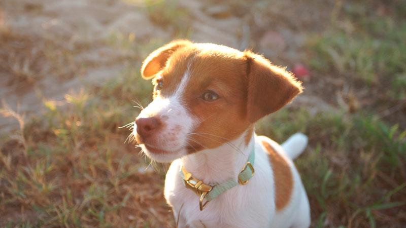Curso para cachorros a domicilio