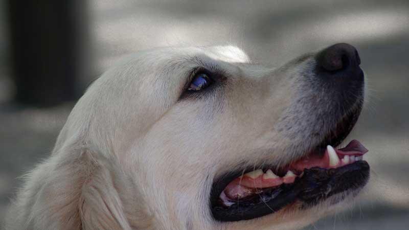 educacion canina y etologia