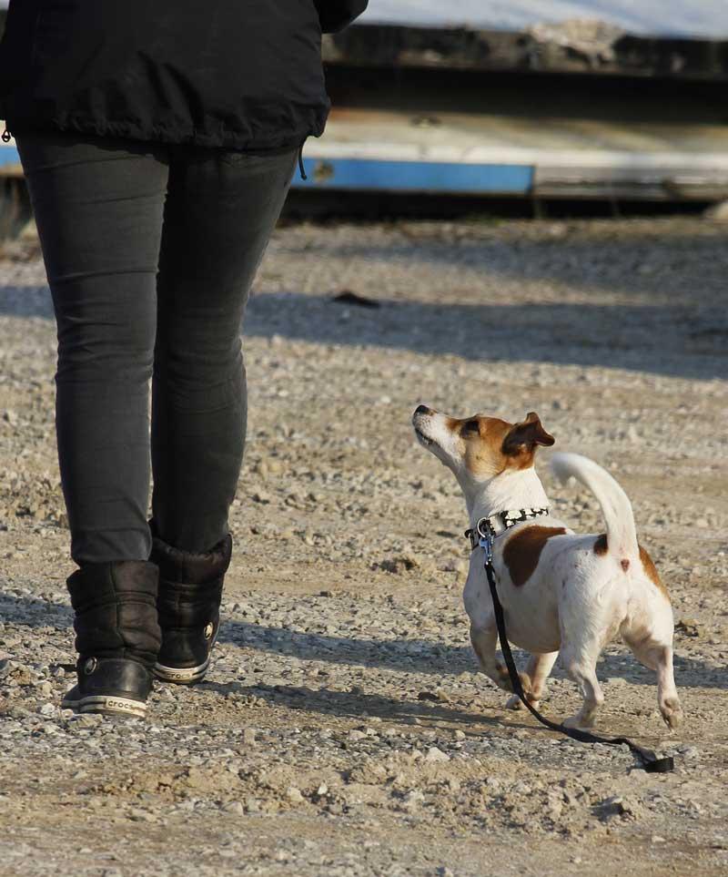educador canino a domicilio