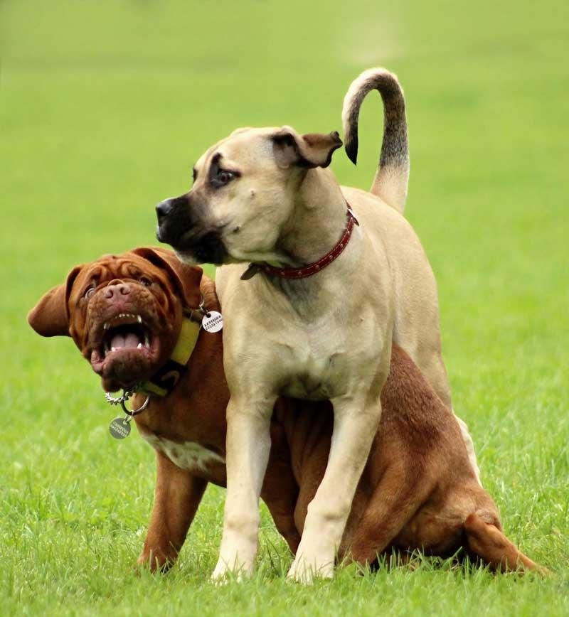 el lenguaje de los perros las señales de calma