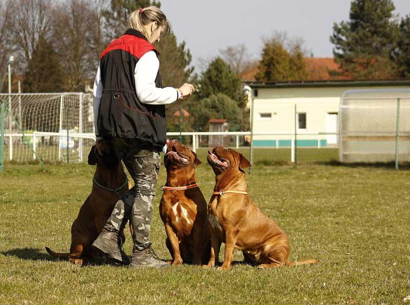 etologo canino o adiestrador de perros