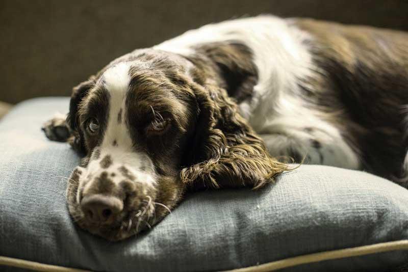 evita que tu perro rompa su cama