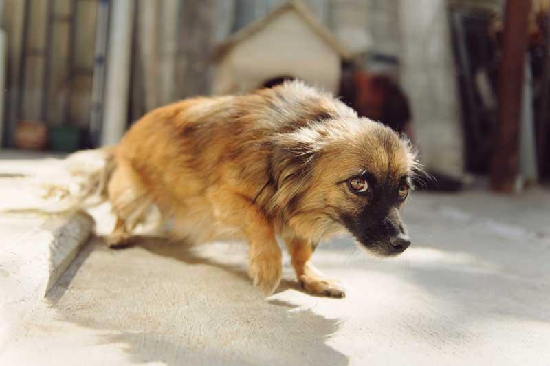 juegos interactivos para perros con problemas emocionales