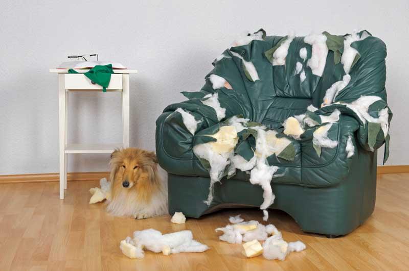 juguetes interactivos para perros que rompe cosas
