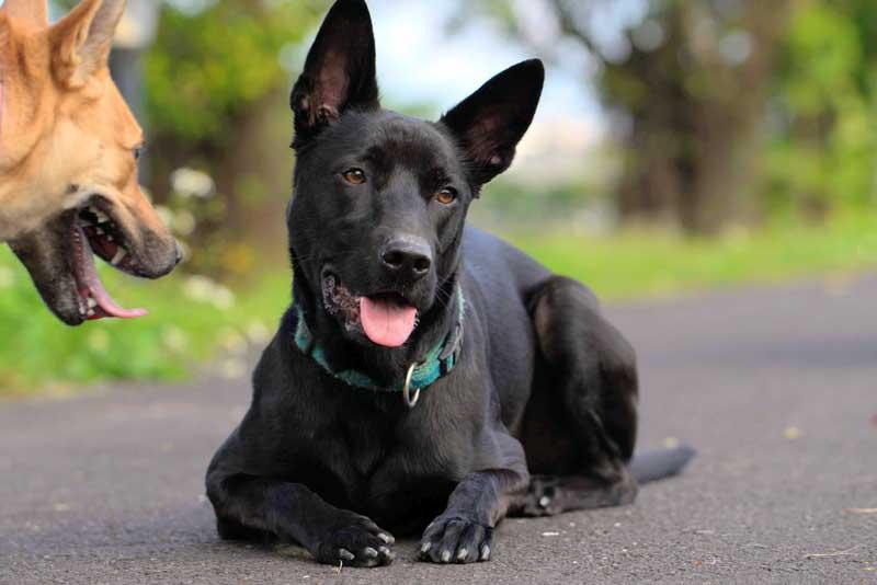 el lenguaje canino comunicacion entre perros