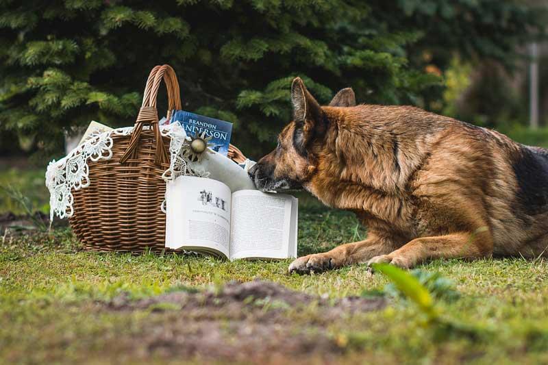 📚 Libros de Adiestramiento Canino: ¡Los Mejores Libros sobre Perros!
