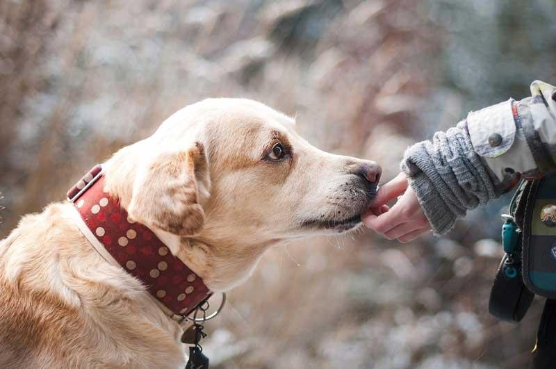 los perros son capaces de aprender