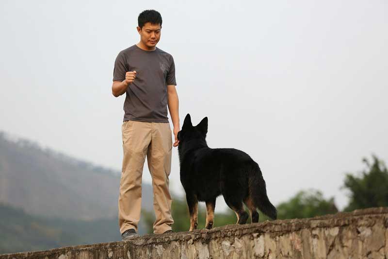 mejores adiestradores caninos