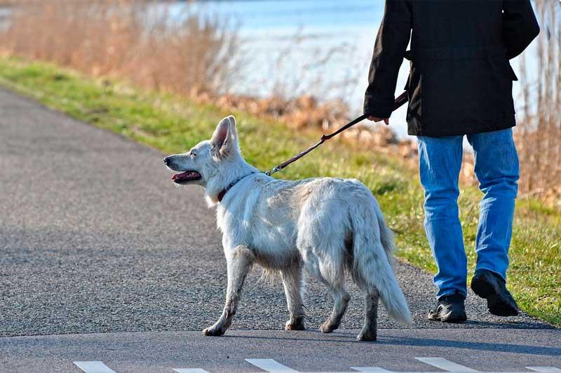 paseando a mi perro