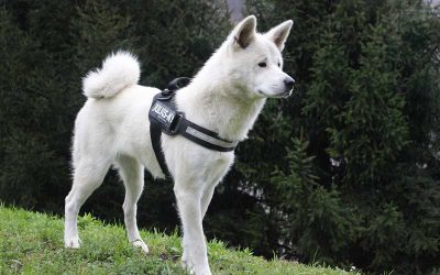 ¿Piensas que Tu Perro es Muy Dominante con Otros Perros?