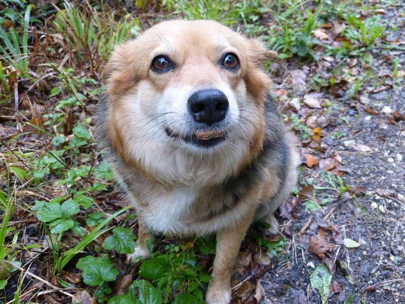 reforzamiento positivo en perros
