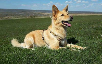 Adiestramiento Canino en Positivo ¿En qué consiste?