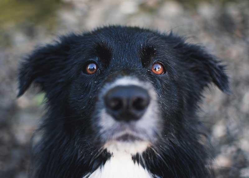 tu perro piensa y te quiere
