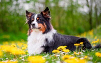 Comandos para Enseñar a tu Perro